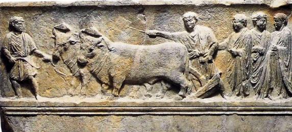 Sulcus Primigenius